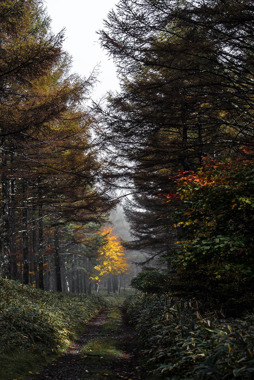 秋風の通り道