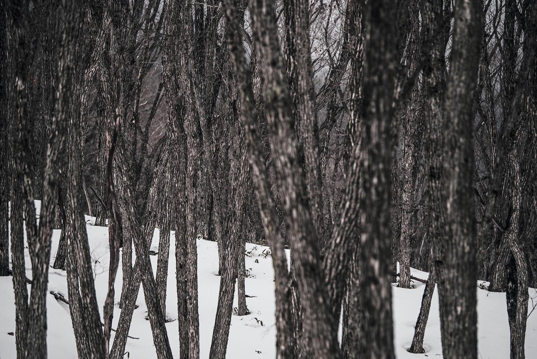 木々の狭間