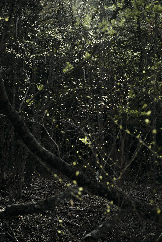 深い森の底