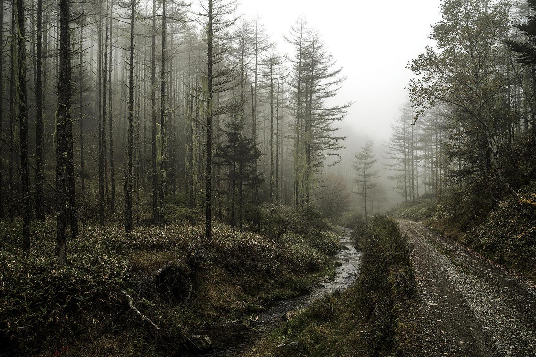 サルオガセの森